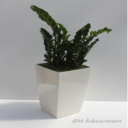 Bepflanzte Bodenvase mit Zamiocula