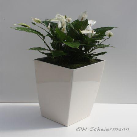 Bepflanzte Bodenvase mit Spatiphyllum