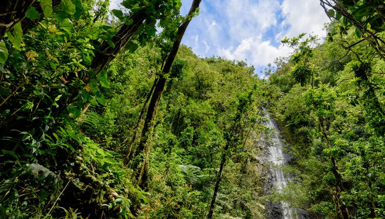 ハワイ、気軽に楽しめる「マノアの滝」ハイキング