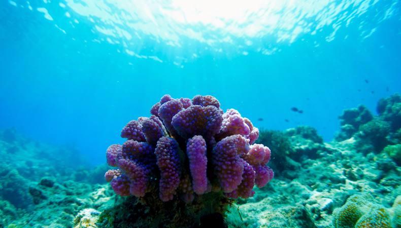 グレートバリアリーフの真ん中でサンゴ礁に囲まれたい!
