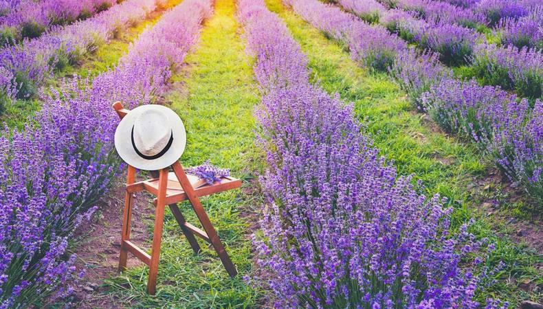 南仏で世界に1つだけの香水を作る!