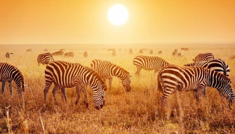 30歳手前の僕・原点回帰の旅 ~南アフリカ・クルーガー国立公園~ ②