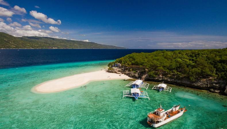 セブ島でジンベイザメと泳いでみたい!
