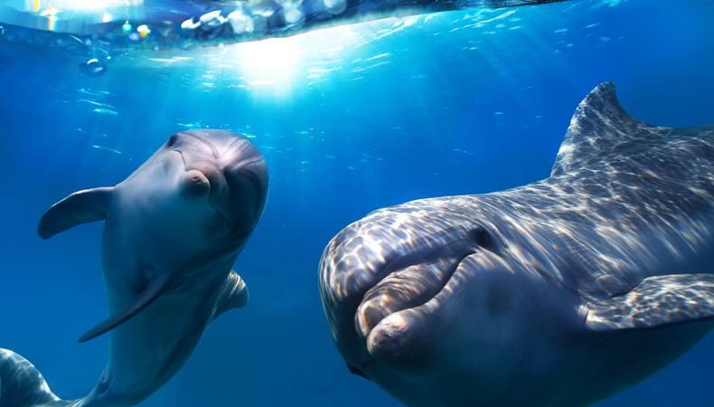 オーストラリアで野生のイルカと泳げるって知ってた?