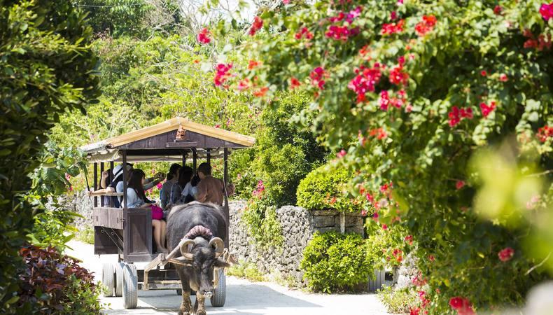 沖縄の竹富島 水牛車に乗って島内を巡る