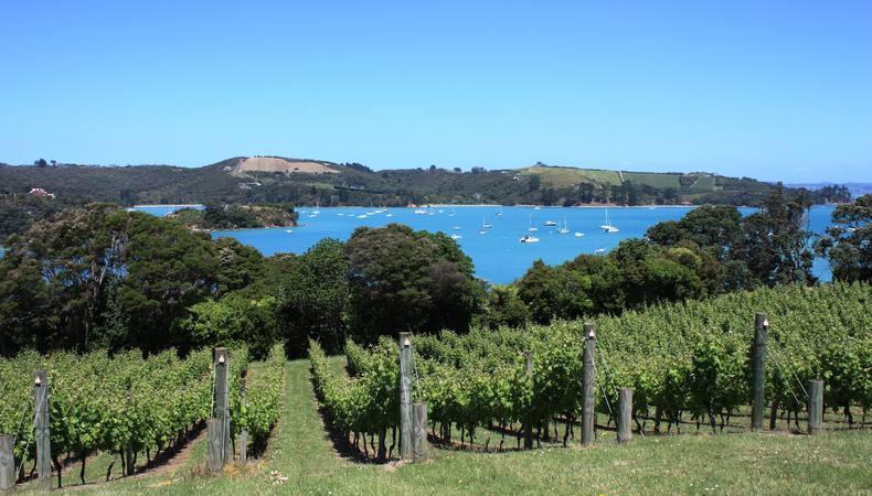 ニュージーランド  ワイヘキ島の大自然の中で上質なワインを味わう!
