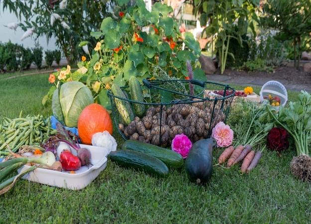 https://pixabay.com/sv/photos/h%C3%B6st-sk%C3%B6rd-garden-gr%C3%B6nsaker-915630/