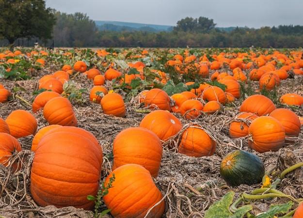 https://pixabay.com/sv/photos/pumpa-f%C3%A4lt-jordbruk-h%C3%B6sten-natur-3784809/