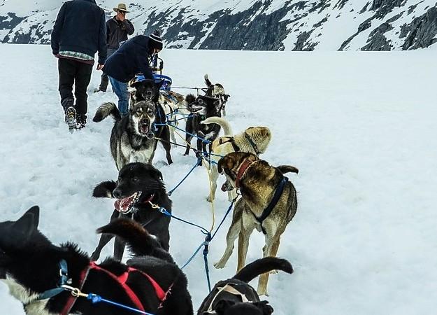 https://pixabay.com/photos/sled-dogs-alaska-dog-sled-sled-dog-363728/