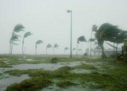 https://pixabay.com/sv/photos/key-west-florida-orkanen-dennis-86025/
