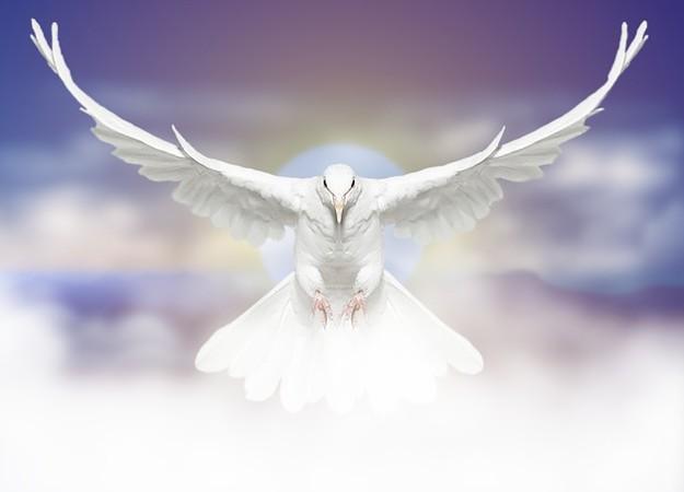https://pixabay.com/sv/photos/duva-f%C3%A5gel-flyger-dove-fred-6062291/