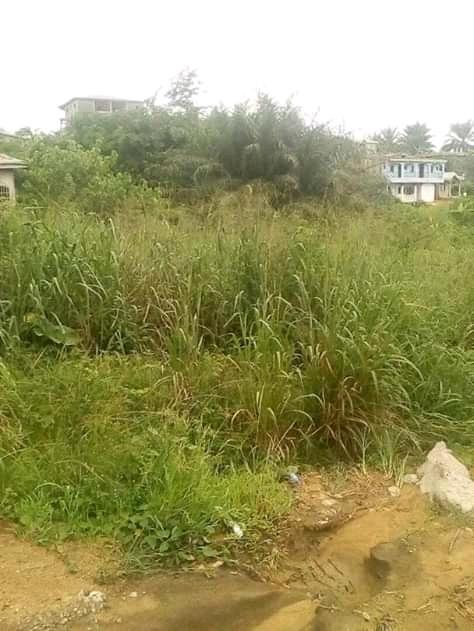 Land for sale at Douala, Bangue, college soflane - 600 m2 - 18 000 000 FCFA