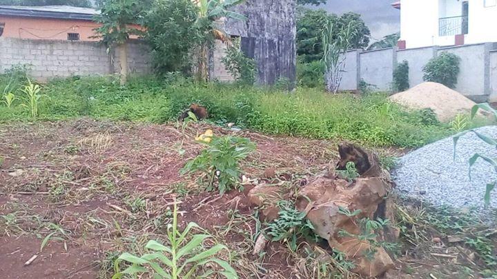 Terrain à vendre - Douala, Logbessou I, 5ieme avenue - 400 m2 - 24 000 000 FCFA