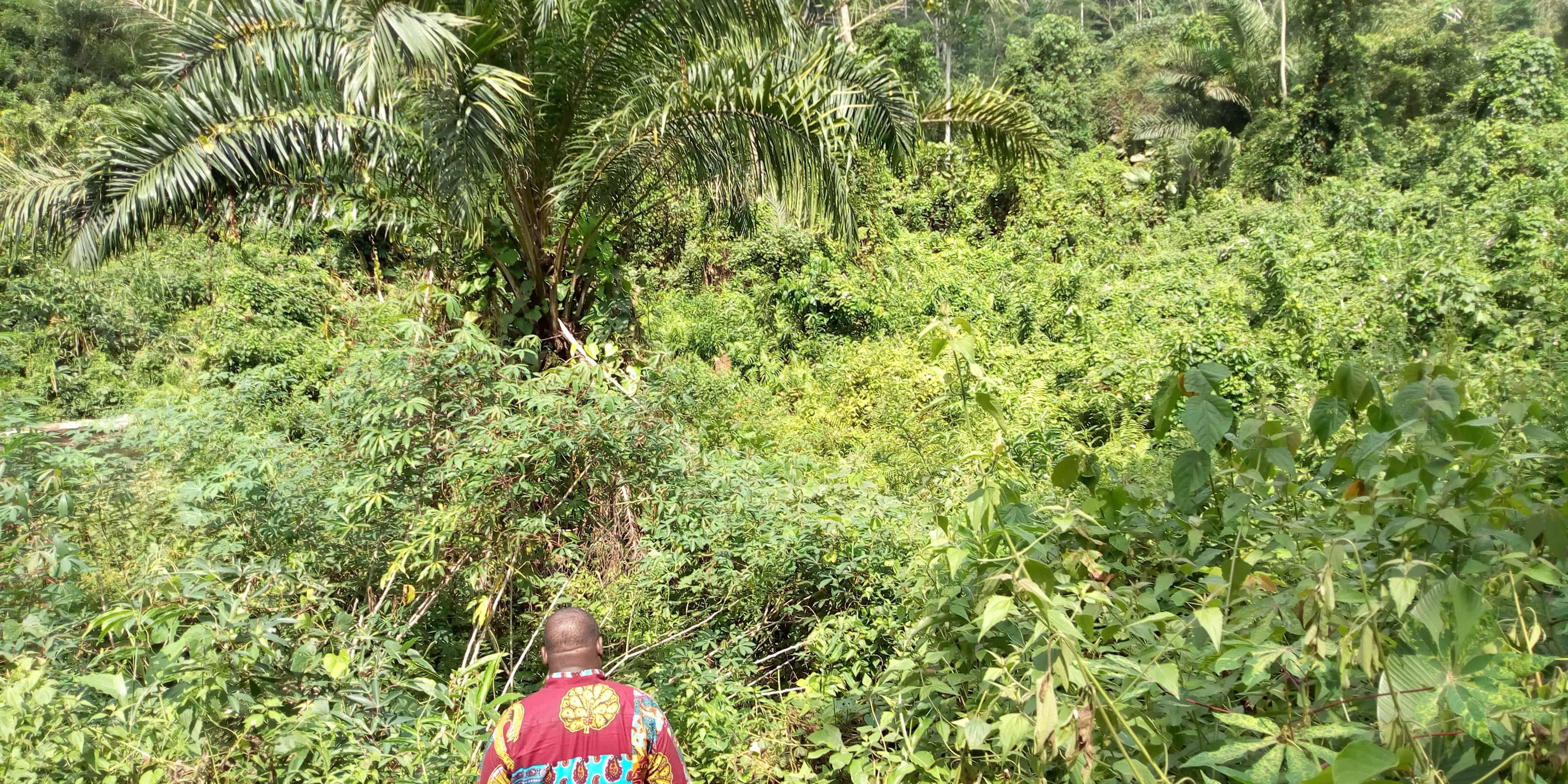 Land for sale at Yaoundé, Nsimalen, immobilier - 20000 m2 - 40 000 000 FCFA