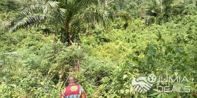 Land for sale at Yaoundé, Nsimalen, TERRAINS À VENDRE YAOUNDÉ MBALMAYO - 20000 m2 - 20 000 000 FCFA