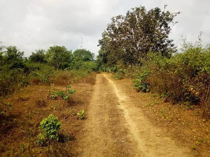 Land for sale at Douala, PK 27, PLUS PRECISEMENT A pk30. le site est situé à moins d un kilomètre et demi de la route principale d'où les travaux de bitumage de l axe douala-yabassi sont déjà effectifs. - 500 m2 - 1 500 000 FCFA