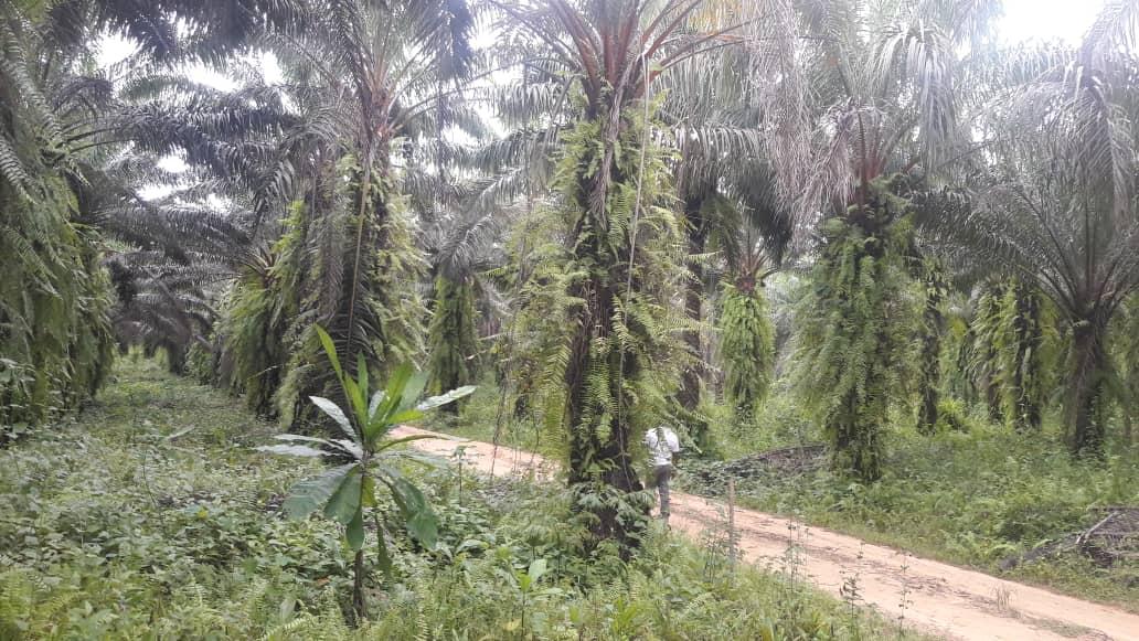 Land for sale at Douala, PK 27, pk 36 - 100 m2 - 8 000 000 FCFA