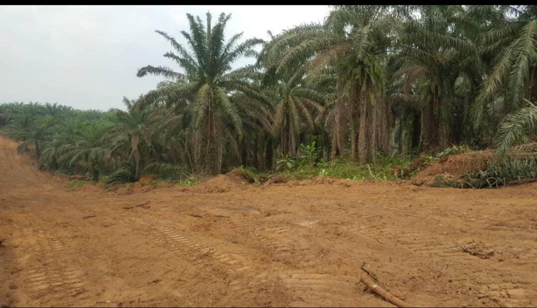 Land for sale at Douala, PK 27, Carrefour PK31 - 1000 m2 - 5 000 000 FCFA