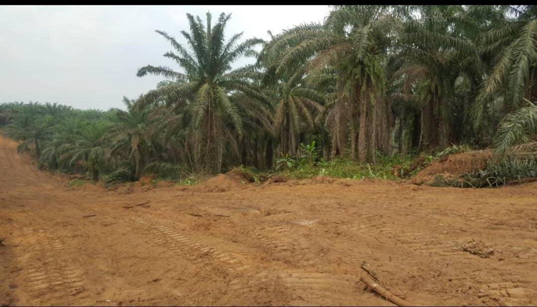 Land for sale at Douala, Bassa, Carrefour PK31 - 1000 m2 - 5 000 000 FCFA