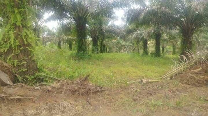 Land for sale at Douala, PK 20, Après l'église Catholique de PK 21 - 55000 m2 - 5 000 000 FCFA