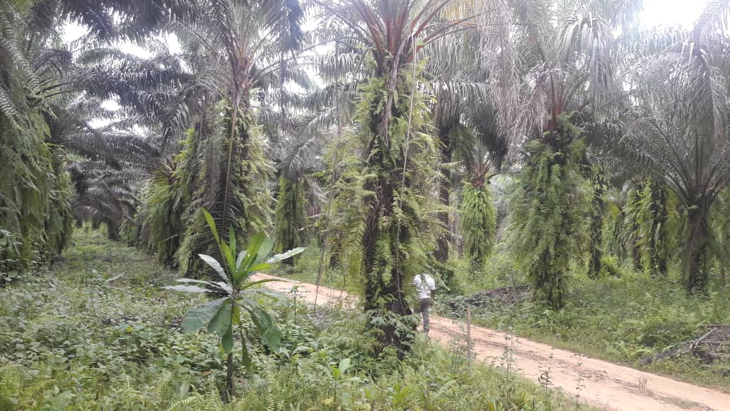 Land for sale at Douala, Bassa, pk 36 - 10 m2 - 8 000 000 FCFA