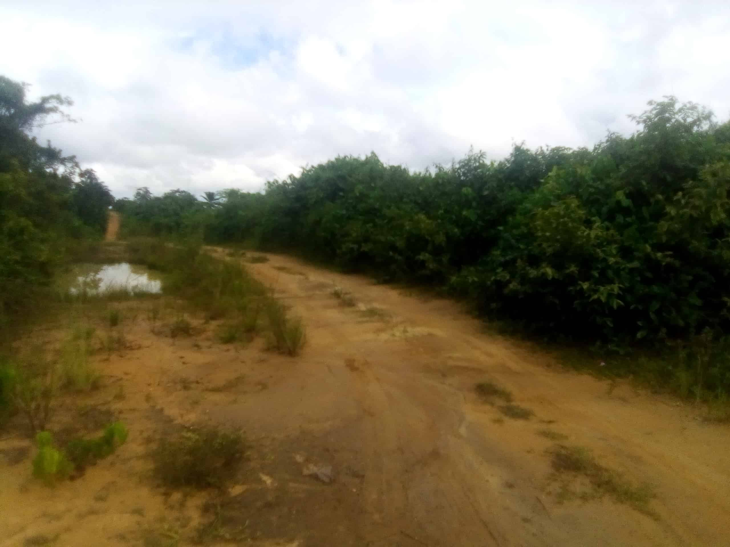 Terrain à vendre - Douala, Logbessou II, Bassong - 125 m2 - 800 000 FCFA