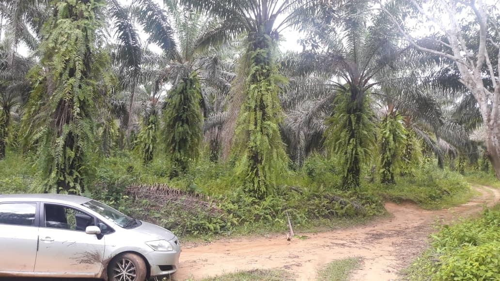 Terrain à vendre - Douala, Bassa, pk 36 - 100 m2 - 800 000 FCFA