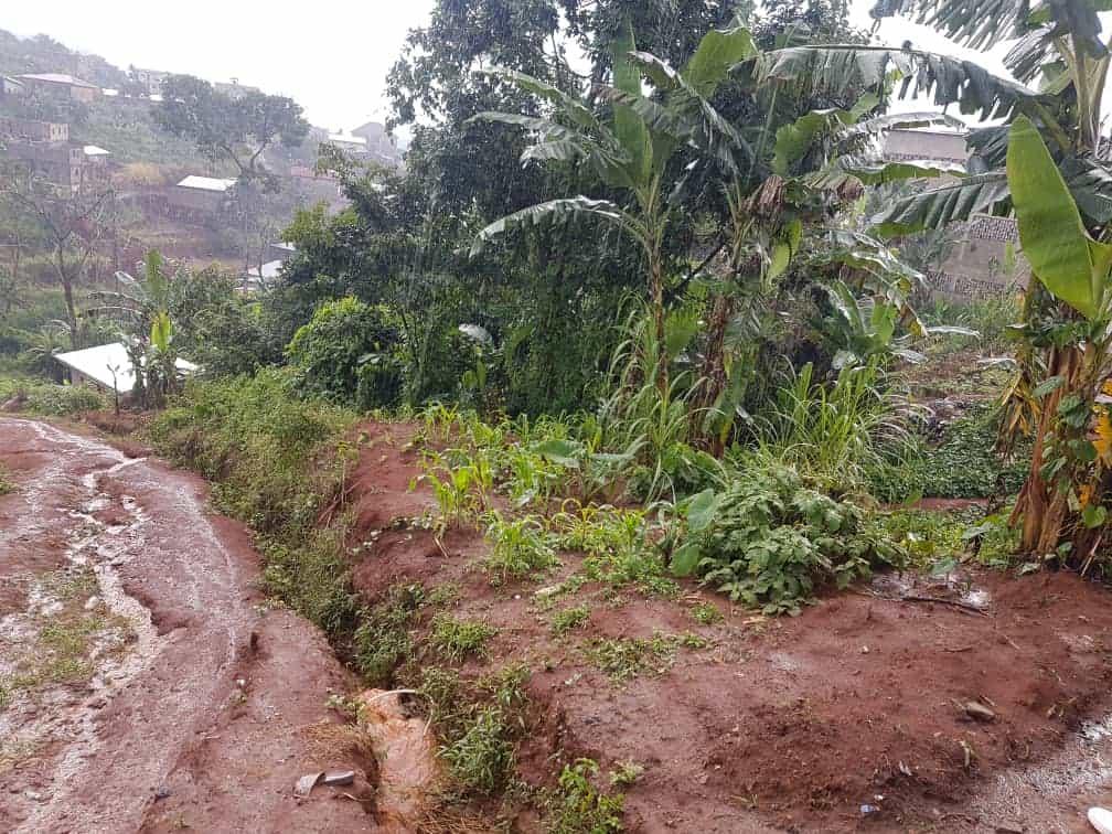 Terrain à vendre - Yaoundé, Nkolbisson, Béatitude - 1750 m2 - 26 250 000 FCFA