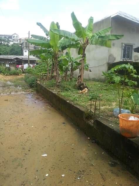 Land for sale at Douala, Bangue, poste de police - 175 m2 - 6 000 000 FCFA