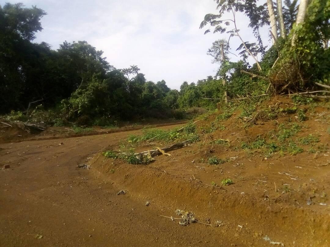 Land for sale at Douala, Bassa, Nkondjock - 10000 m2 - 35 000 000 FCFA
