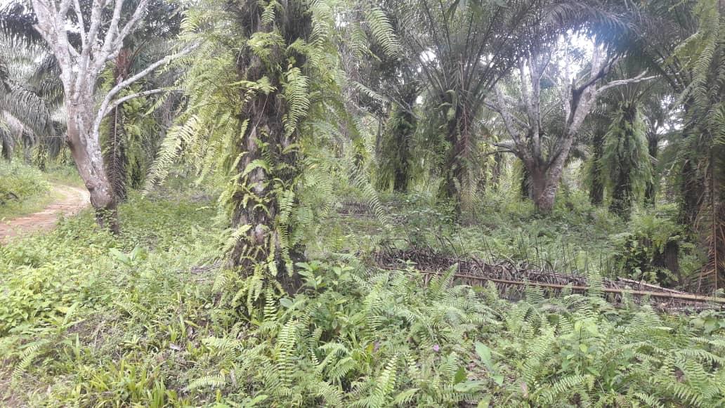 Terrain à vendre - Douala, Bassa, pk 36 - 100 m2 - 800 000 000 FCFA