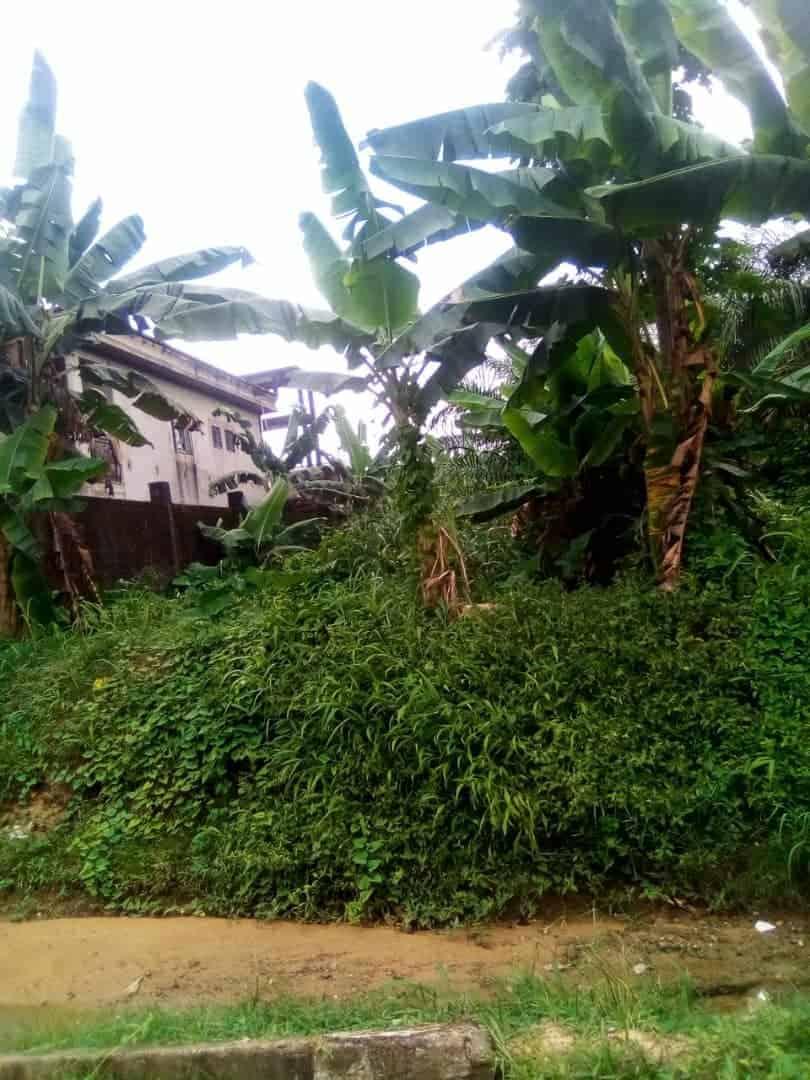 Land for sale at Douala, Bangue, lendi derriere la maison blanche - 441 m2 - 12 000 000 FCFA