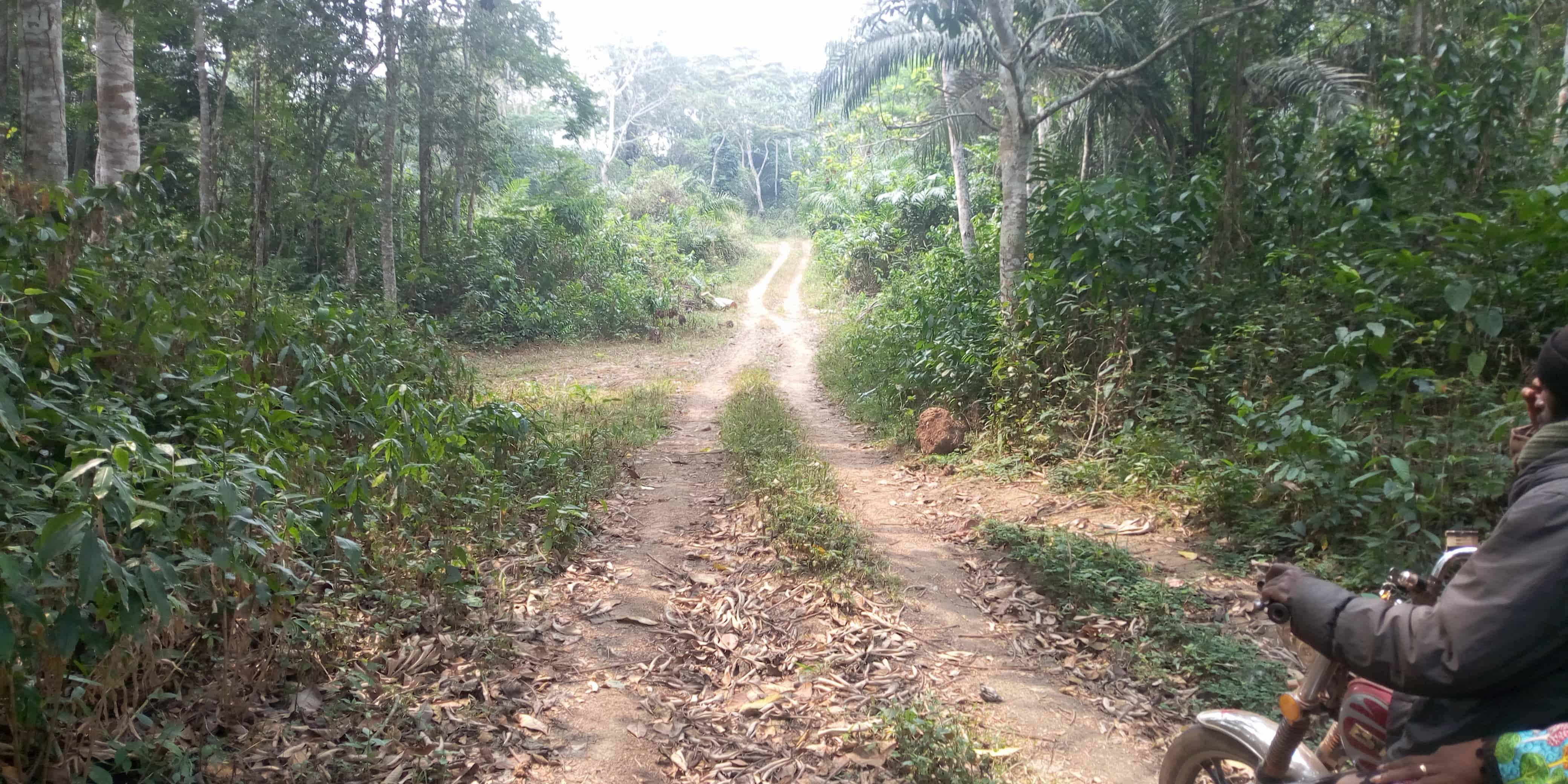 Land for sale at Yaoundé, Nsimalen, 3 HECTARES TITRÉS À VENDRE YAOUNDÉ NSIMALEN À 10 KM DE LA PISTE D'ATTERRISSAGE - 30000 m2 - 60 000 000 FCFA