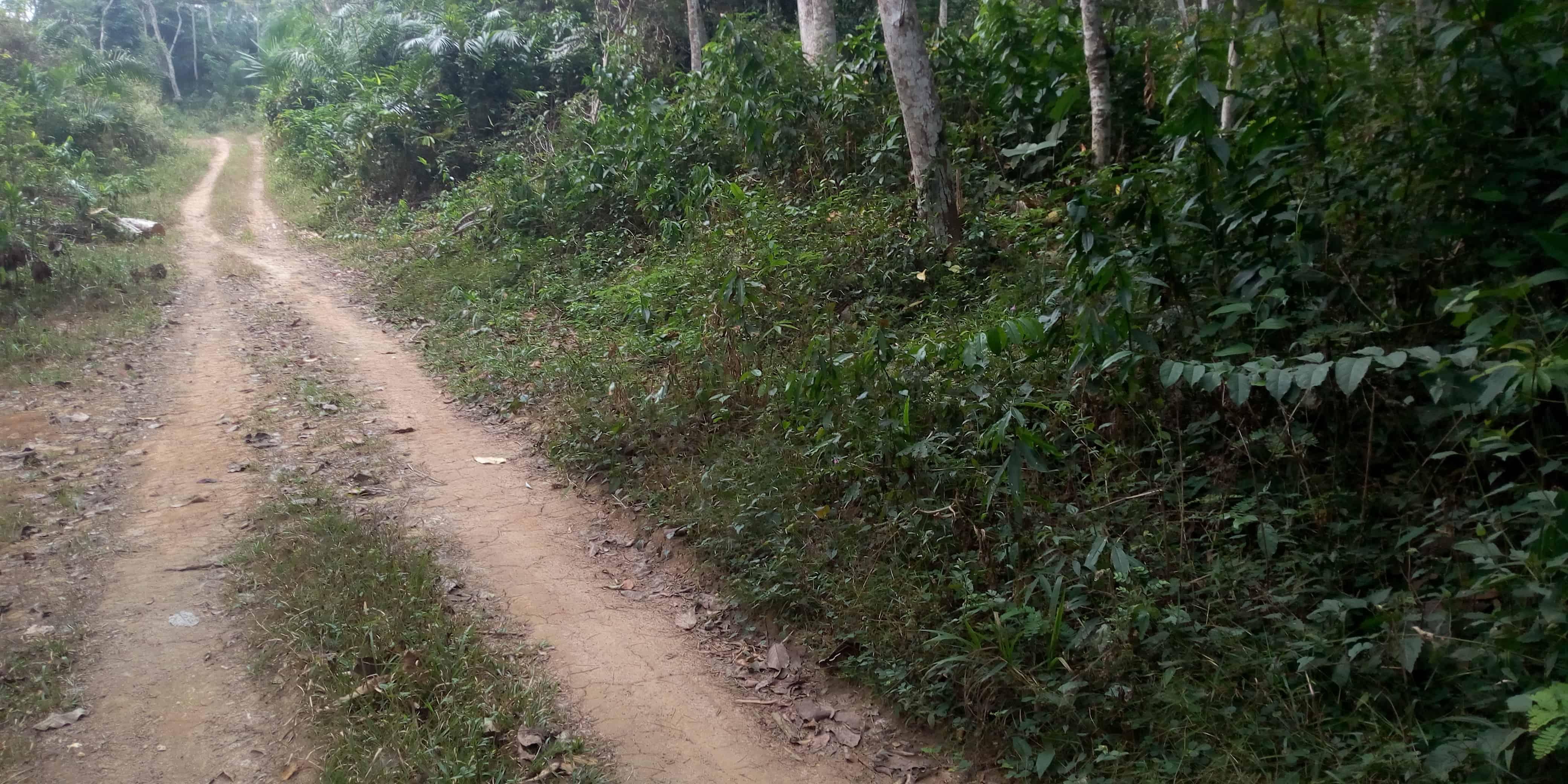 Land for sale at Yaoundé, Nsimalen, 3 HECTARES TITRÉS À VENDRE YAOUNDÉ NSIMALEN À 10 KM DE LA PISTE D'ATTERRISSAGE - 30000 m2 - 70 000 000 FCFA