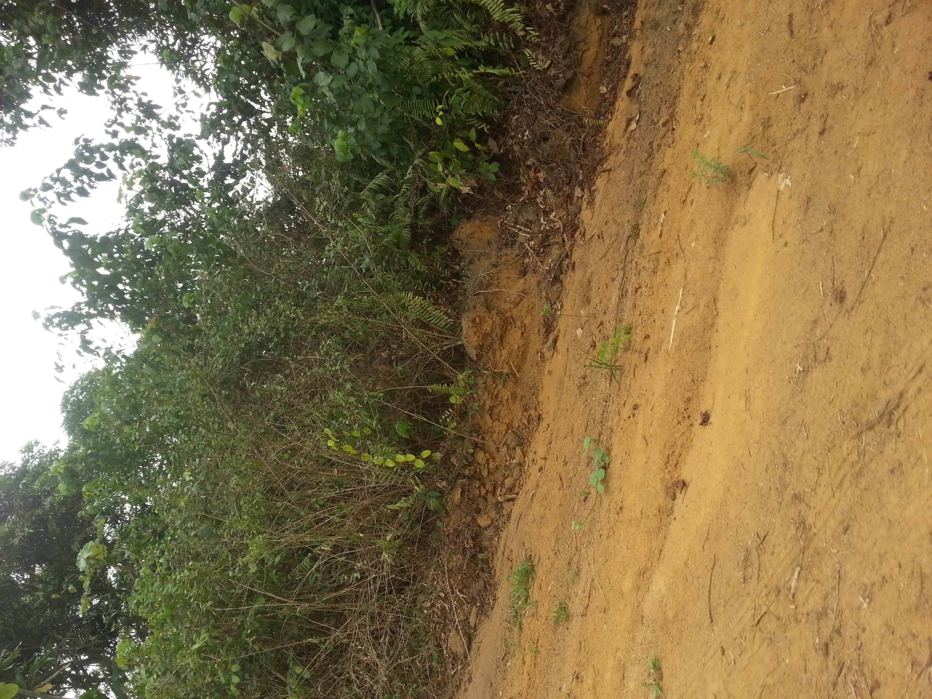 Land for sale at Douala, PK 19, Après l'université - 10000 m2 - 90 000 000 FCFA