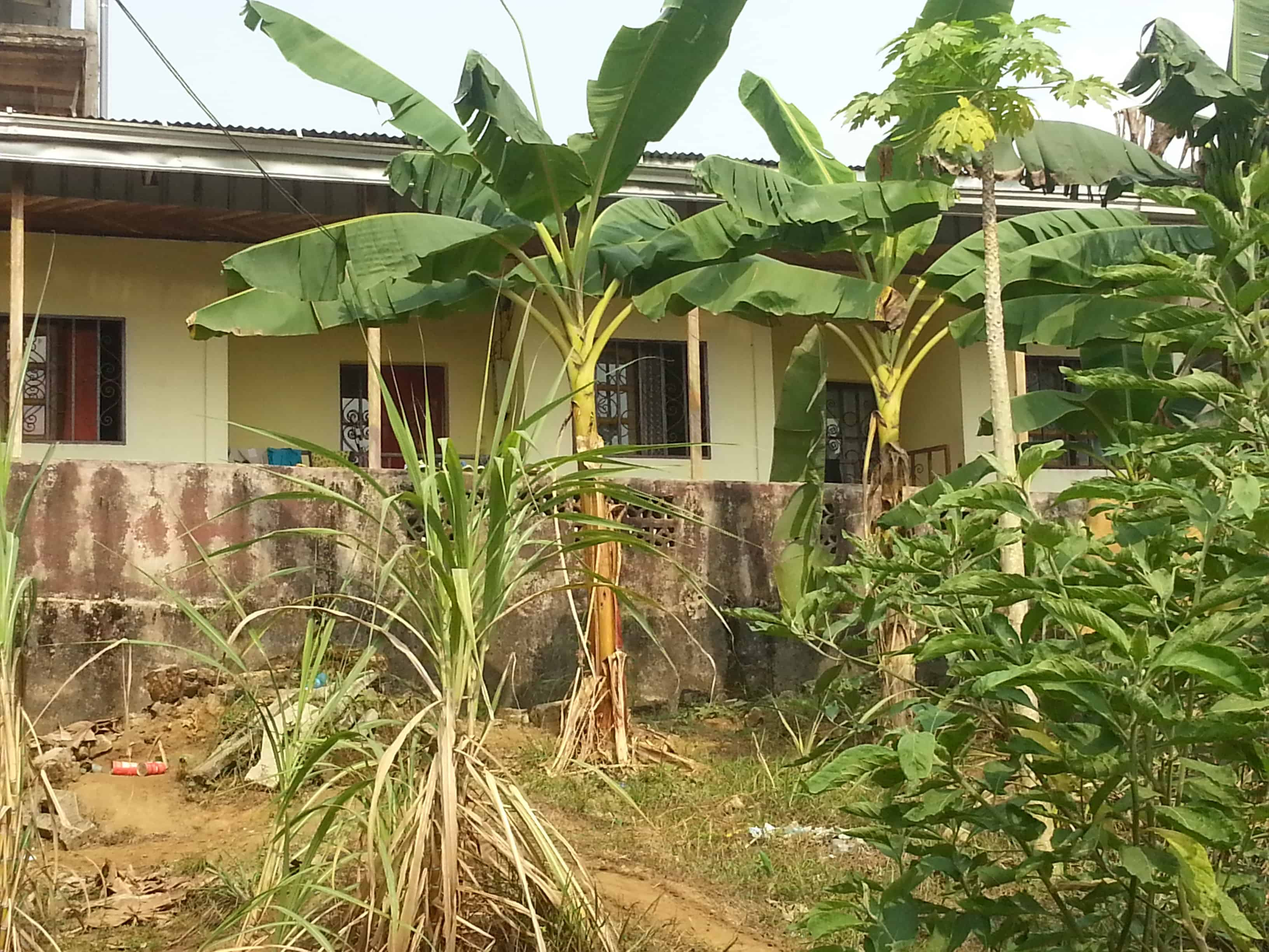 House (Wayside home) for sale - Douala, Nyala Bassa, Nkolbon - 1 living room(s), 1 bedroom(s), 1 bathroom(s) - 25 000 000 FCFA / month