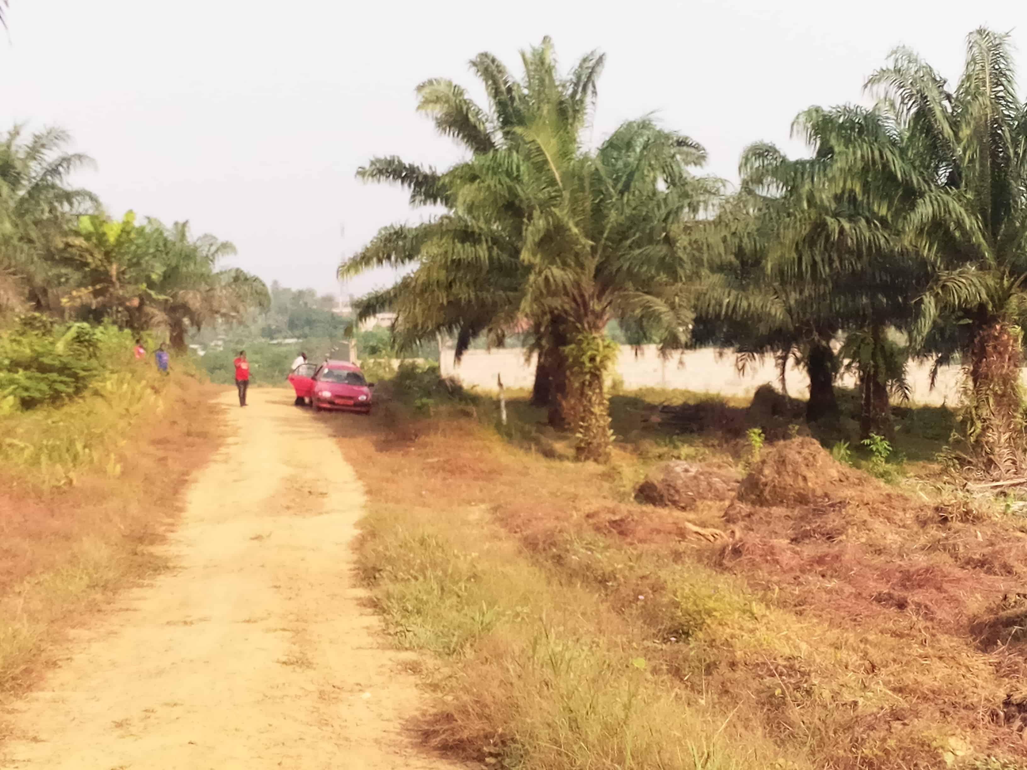 Land for sale at Douala, PK 21, avant le marché , coté droit, plus de 10 ha disponibles +237 694362323 et +237 676201163 - 500 m2 - 9 000 000 FCFA