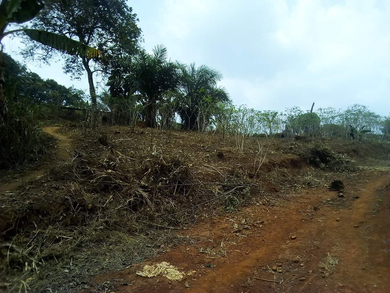 Land for sale at Yaoundé, Nkolondom, carrefour theo - 1000 m2 - 30 000 000 FCFA