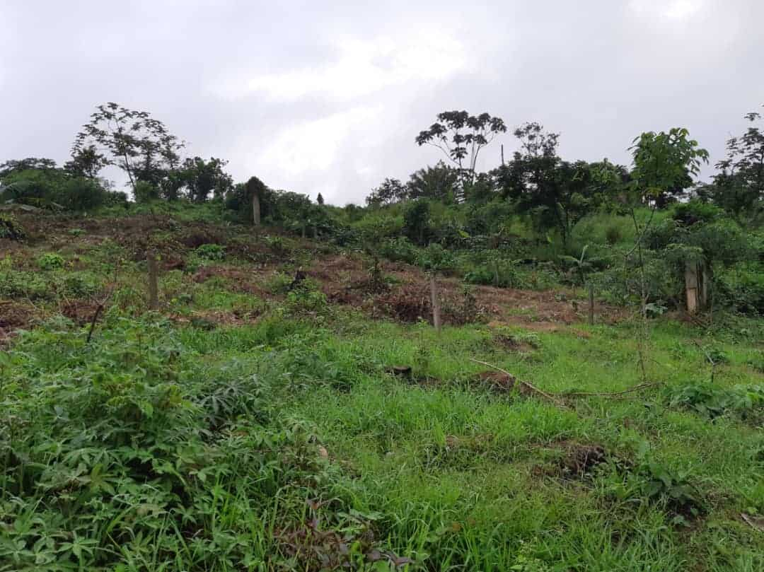 Land for sale at Douala, Lendi, Apres la chefferie 150 metre de la route principale - 625 m2 - 12 500 000 FCFA