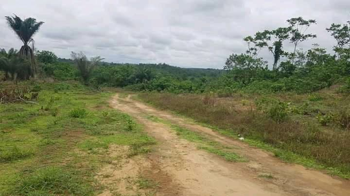 Land for sale at Yaoundé, Simbock, Eloudem - 10000 m2 - 50 000 000 FCFA