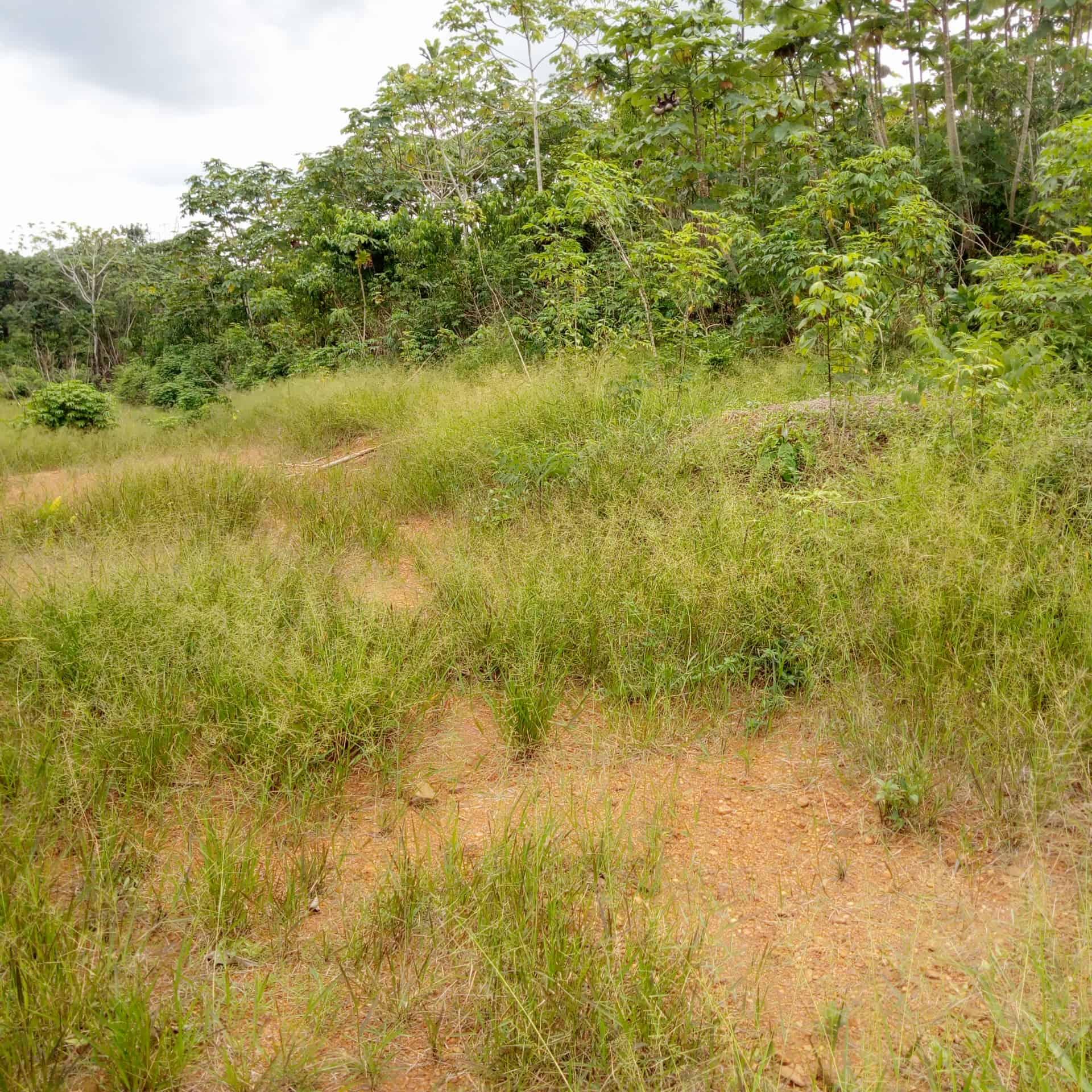 Land for sale at Douala, Bassa, Dibamba entrée kendeck - 10000 m2 - 6 000 000 FCFA