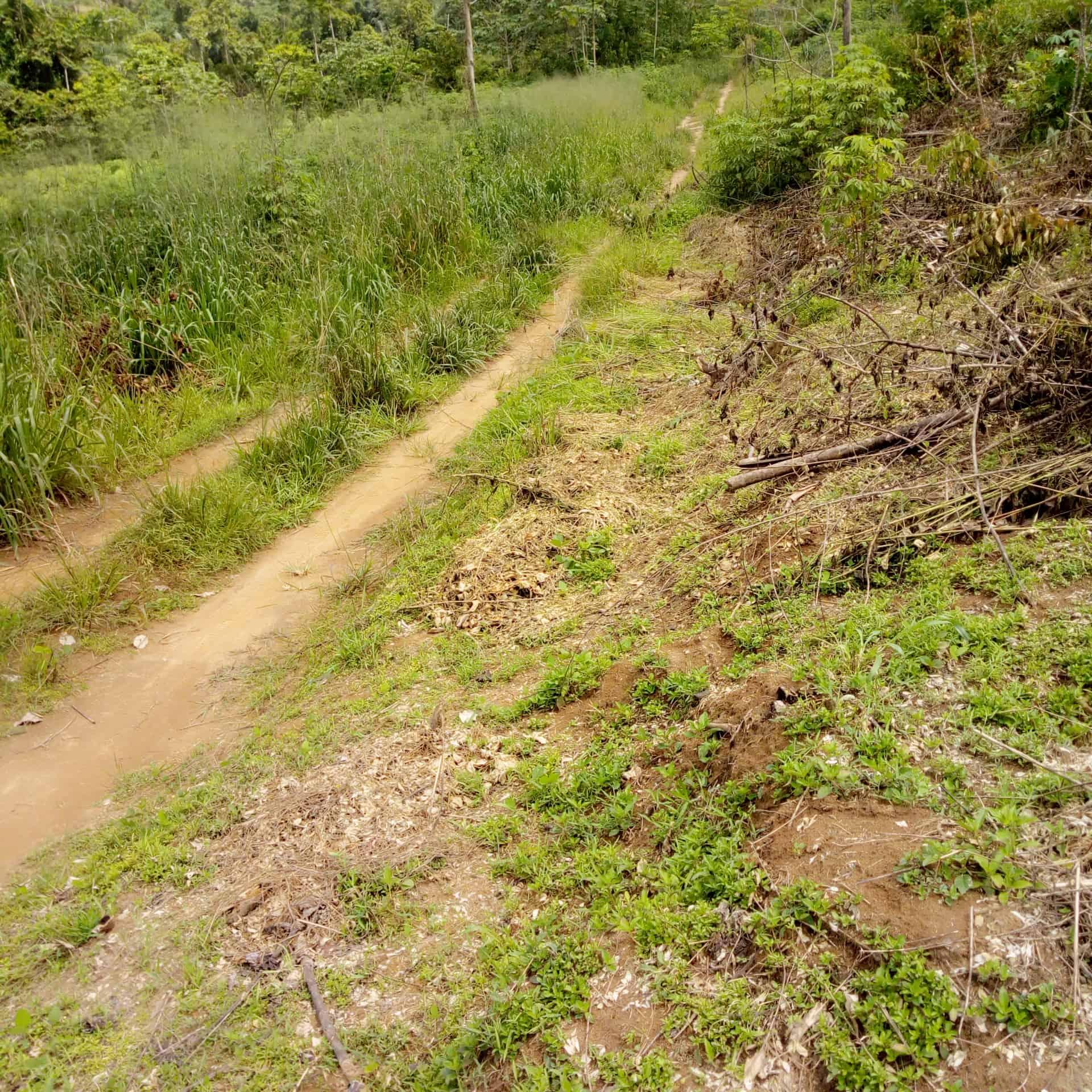 Land for sale at Douala, PK 27, Pk27 5km - 10000 m2 - 2 000 000 FCFA