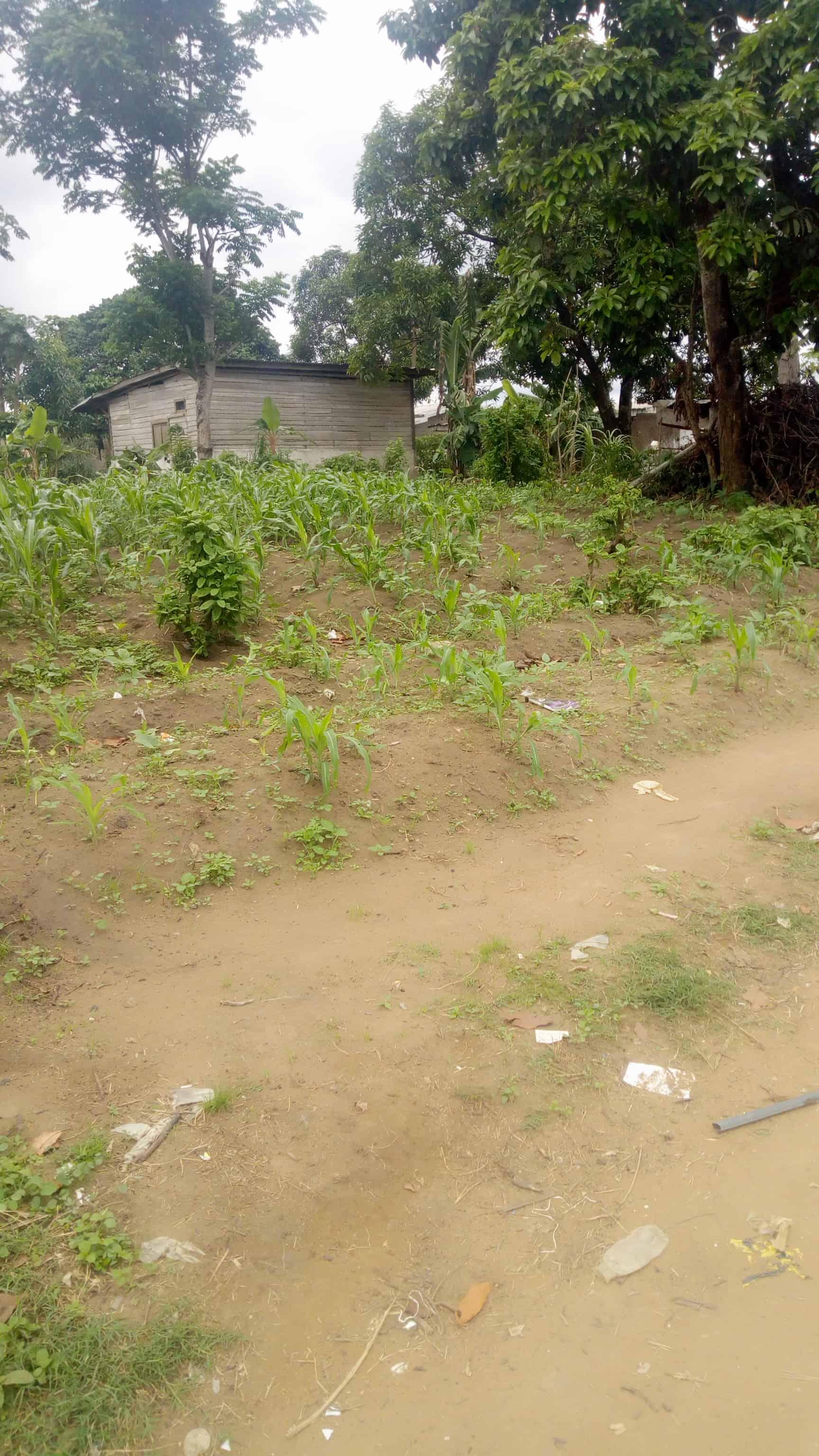 Land for sale at Douala, PK 19, Dans le quartier - 1000 m2 - 50 000 000 FCFA
