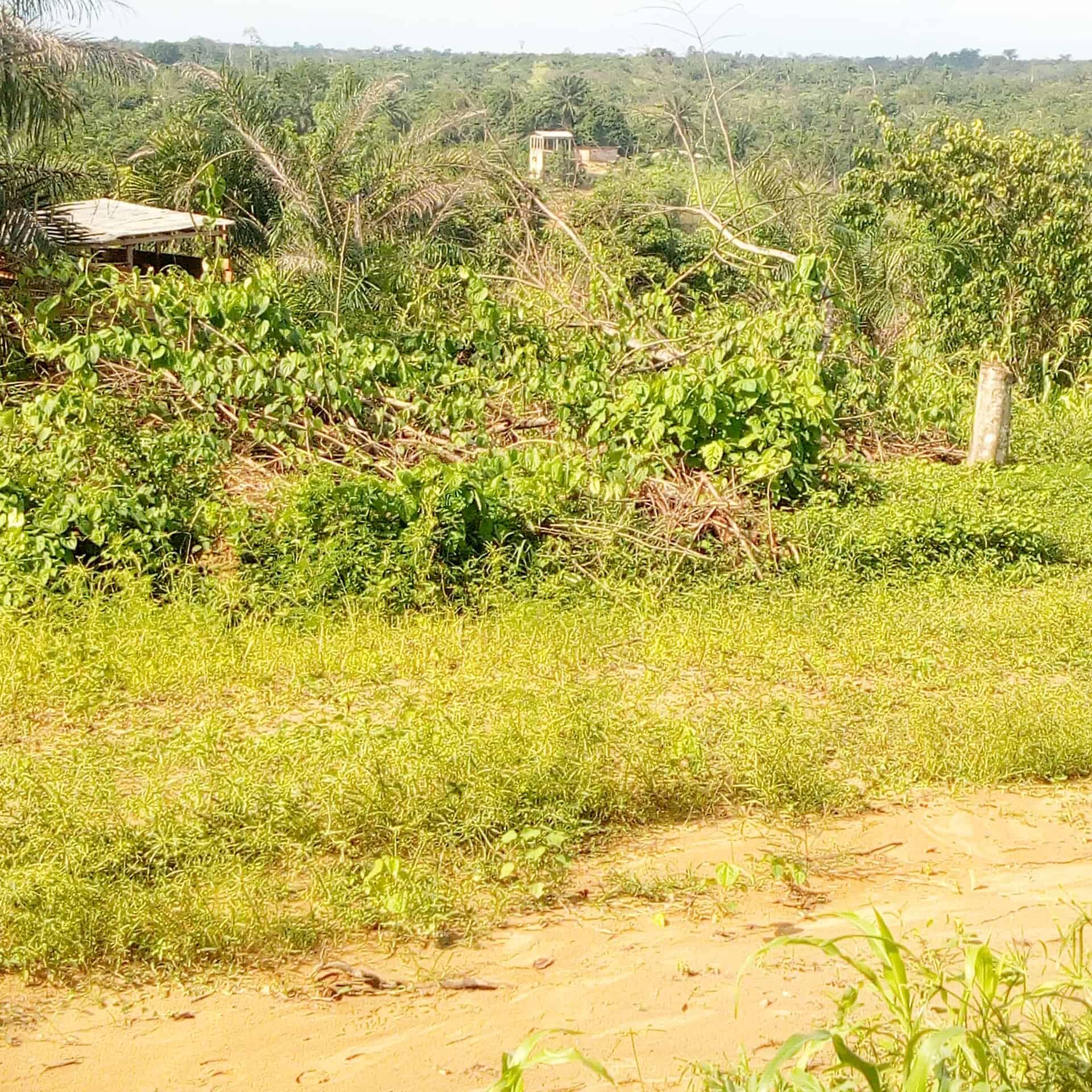 Land for sale at Douala, PK 24, Pk24 - 2000 m2 - 20 000 000 FCFA