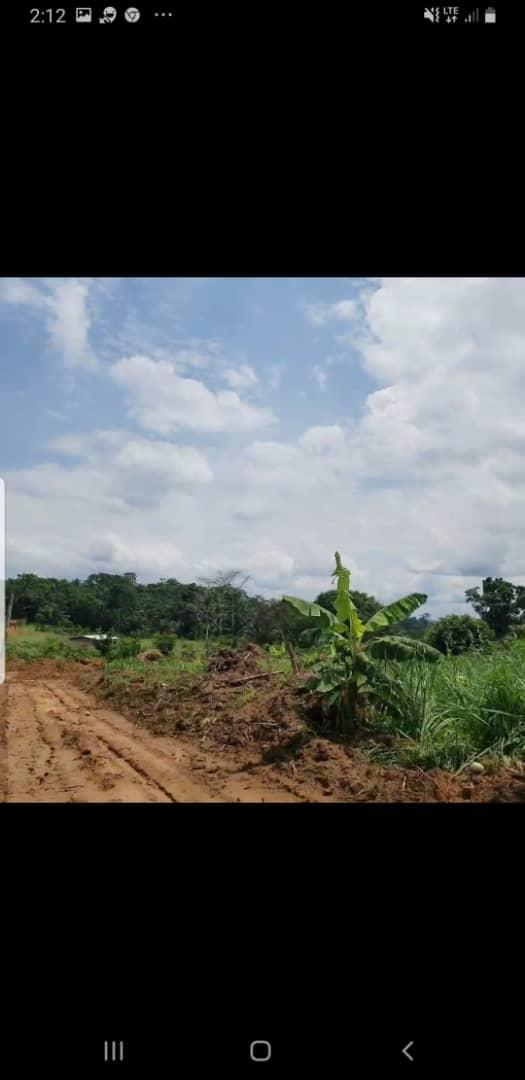 Land for sale at Douala, PK 27, Entrée Guinness ,or vert - 5000 m2 - 50 000 000 FCFA