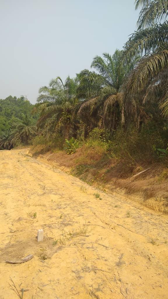 Land for sale at Douala, Lendi, Logement canadien,limite gombe - 300000 m2 - 7 000 000 FCFA