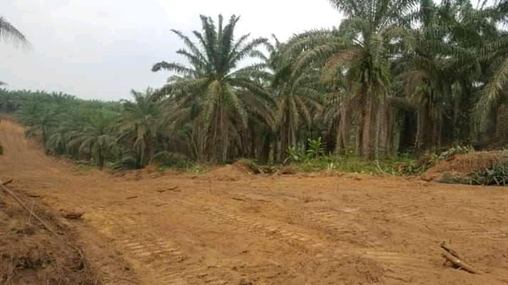 Land for sale at Douala, Lendi, Logement canadien,limite gombe - 350000 m2 - 6 000 000 FCFA