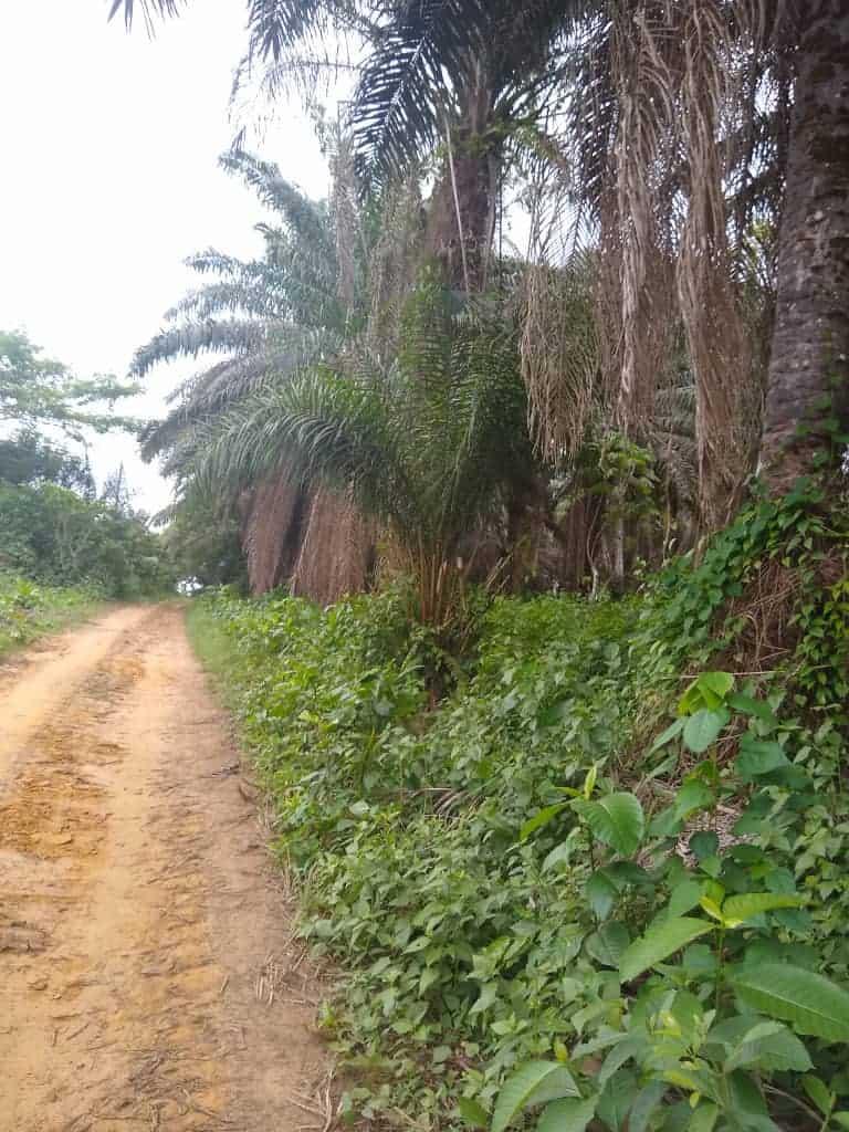 Terrain à vendre - Douala, Nyala Bassa, Yassa entrée Bongo - 10000 m2 - 10 000 000 FCFA