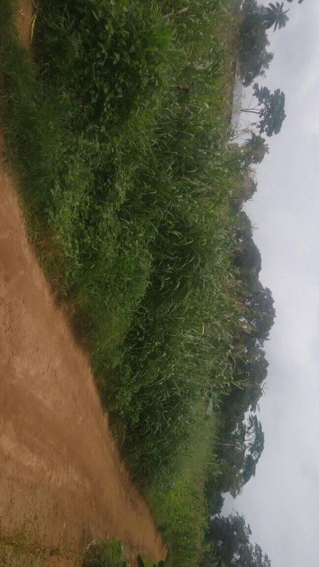 Land for sale at Yaoundé, Centre administratif, nkoabang - 500 m2 - 7 500 000 FCFA