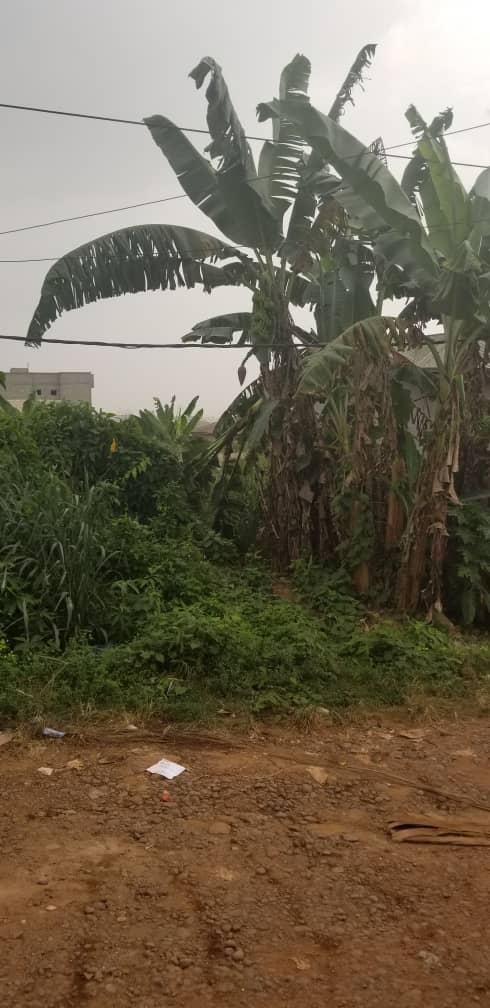Terrain à vendre - Douala, Logpom, derrière Gabon bar - 250 m2 - 22 000 000 FCFA